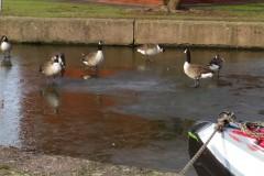 BIRDS-WALKING-ON-WATER-Feb-21-3